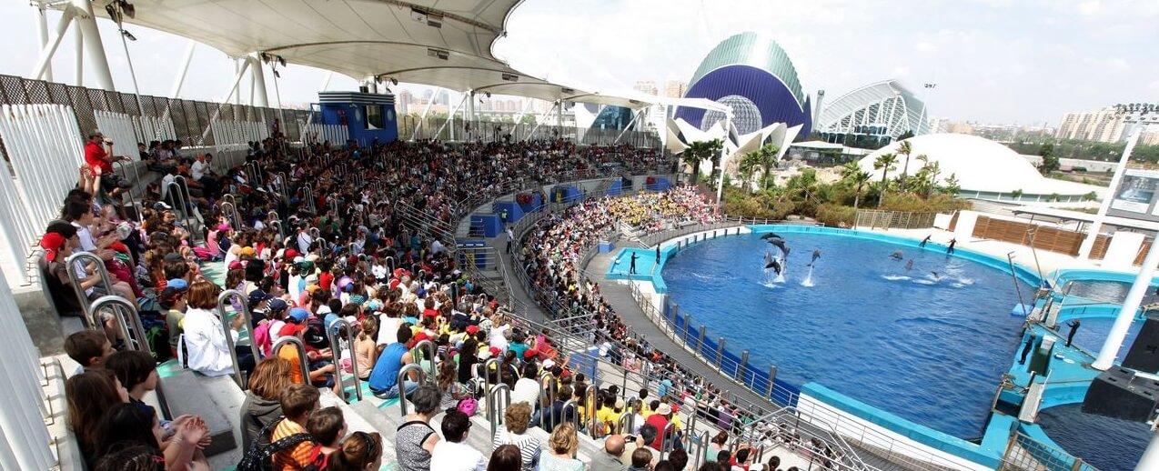 Дельфинарий Валенсии - Exhibición en el Delfinario в Валенсии, туризм в Валенсии, отдых в Валенсии
