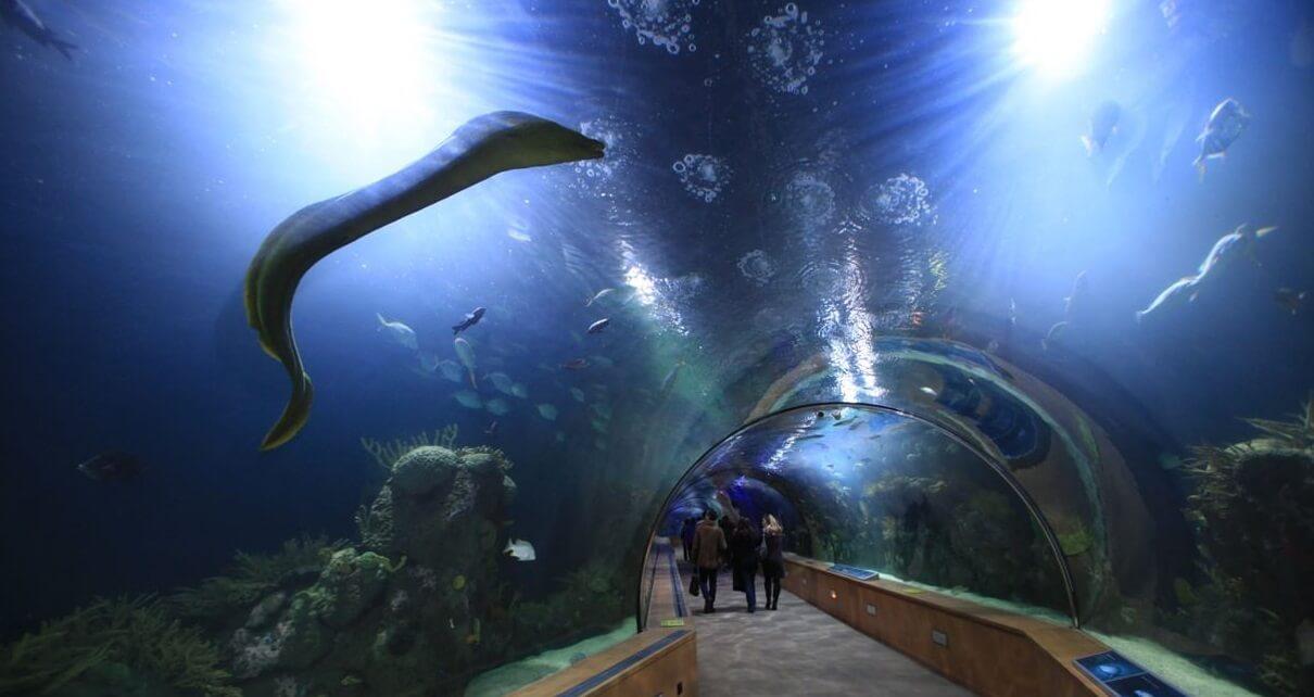 Океанографический парк в Валенсии, туризм в Валенсии, отдых в Валенсии